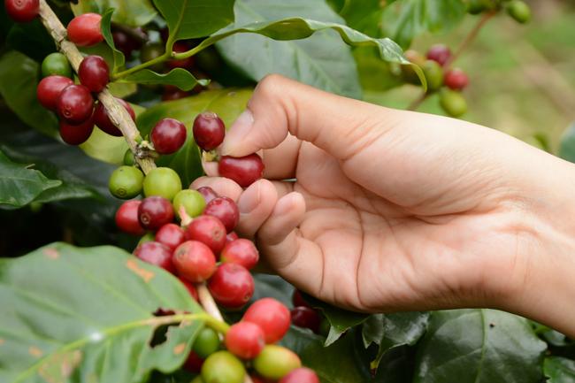 Simpósio dá voz aos cafeicultores em Curitiba