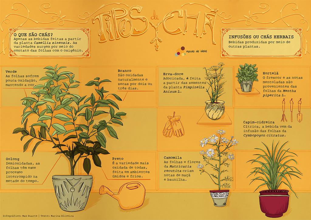 infografico-tipos-cha