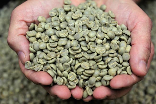 cafe-verde-emagrecimento