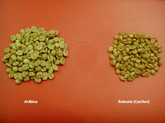Diferença entre Café Arábica e Robusta ? Post02_Arabica-e-Robusta